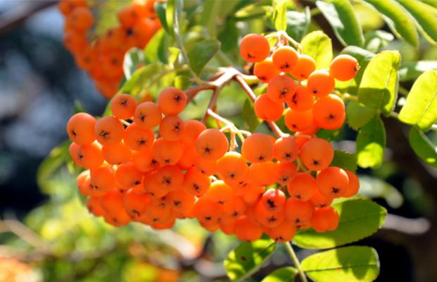 фотографии Trakia Garden (Тракия Гарден) изображение №4