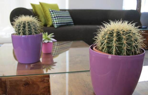 фото Kaktus Playa изображение №34