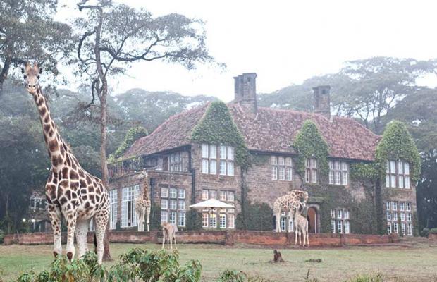 фотографии отеля Giraffe Manor изображение №7