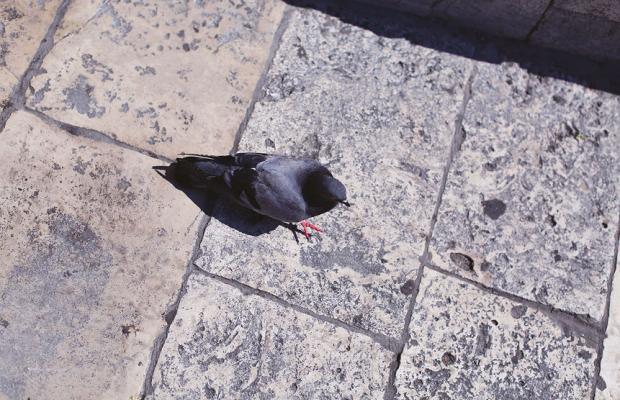 фотографии отеля Hotel Perla изображение №19