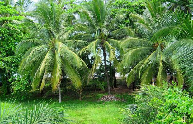 фотографии Suwan Palm Resort (ex. Khaolak Orchid Resortel) изображение №48