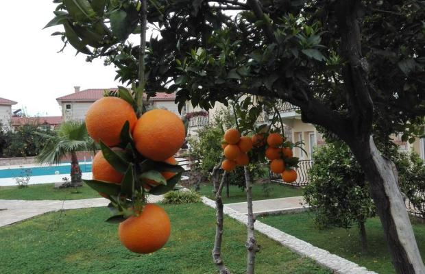 фотографии Mavruka Olu Deniz изображение №4