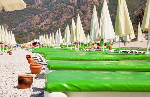 фотографии Daisy Garden Resort (ex. Violet Hotel; Big Rose) изображение №24