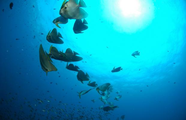 фото отеля Nangyuan Island Dive Resort изображение №57
