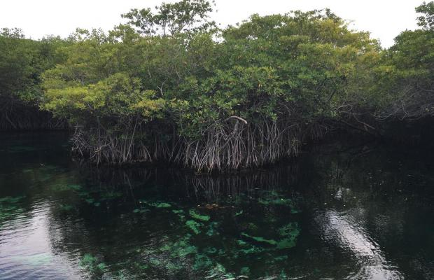 фотографии отеля Bel Air Collection XpuHa Riviera Maya (Bel Air Collection Resort & Animal Sanctuary) изображение №31