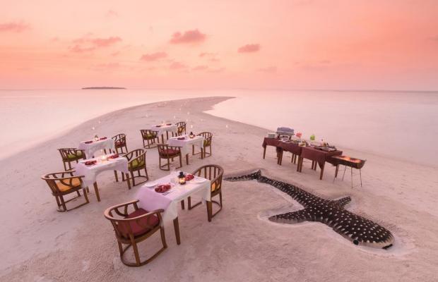 фотографии отеля Dhigufaru Island Resort изображение №35