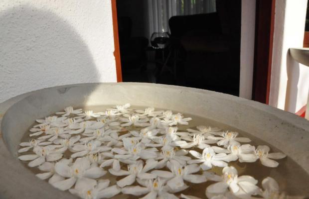 фотографии Polina Resort изображение №32