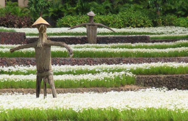 фотографии Yalong Bay Mangrove Tree Resort изображение №24