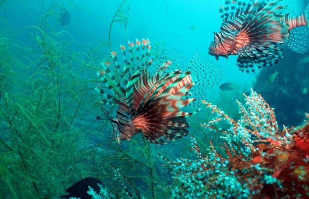 фото отеля Coral Bay Beach and Dive Resort изображение №29