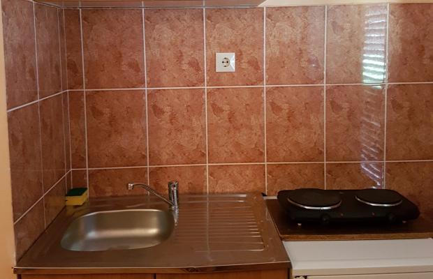 фотографии Pinjatic изображение №12