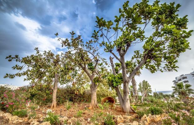 фотографии Cyprotel Florida (ex. Florida Beach Hotel) изображение №16
